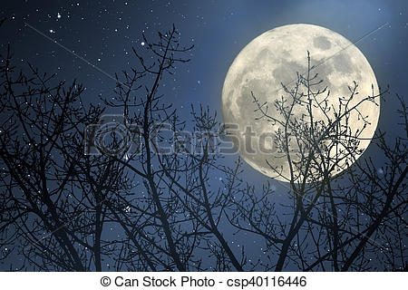 450x320 Full Moon Night. Full Moon Behind Tree Branches In A Starry