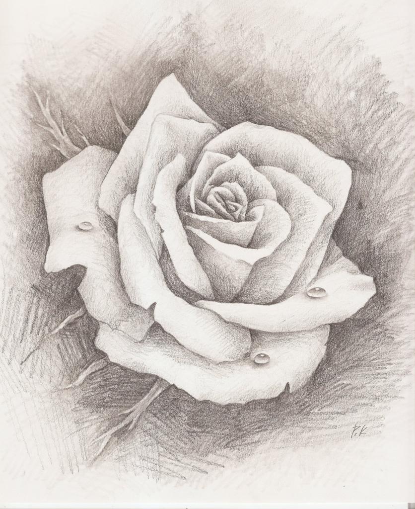 836x1024 Pencil Sketch Rose Pencil Sketch Of Rose Pencil Sketch Rose