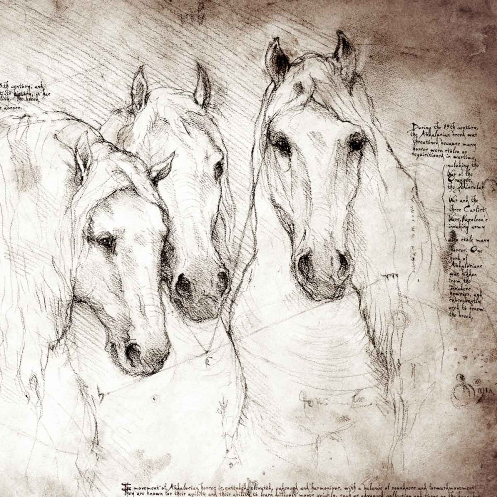 1000x1000 Andalusians Study A Full Size Da Vinci Style Drawing