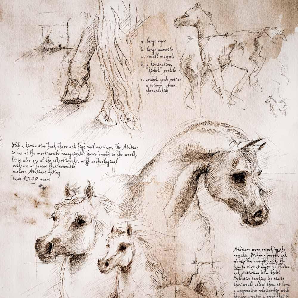 1000x1000 Arabians Study A Full Size Da Vinci Style Drawing