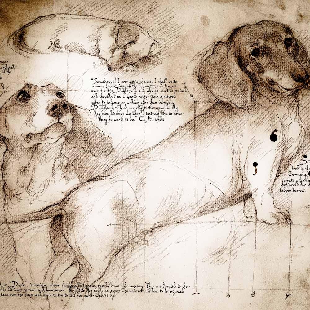 1000x1000 Dachshund Study A Full Size Da Vinci Style Drawing
