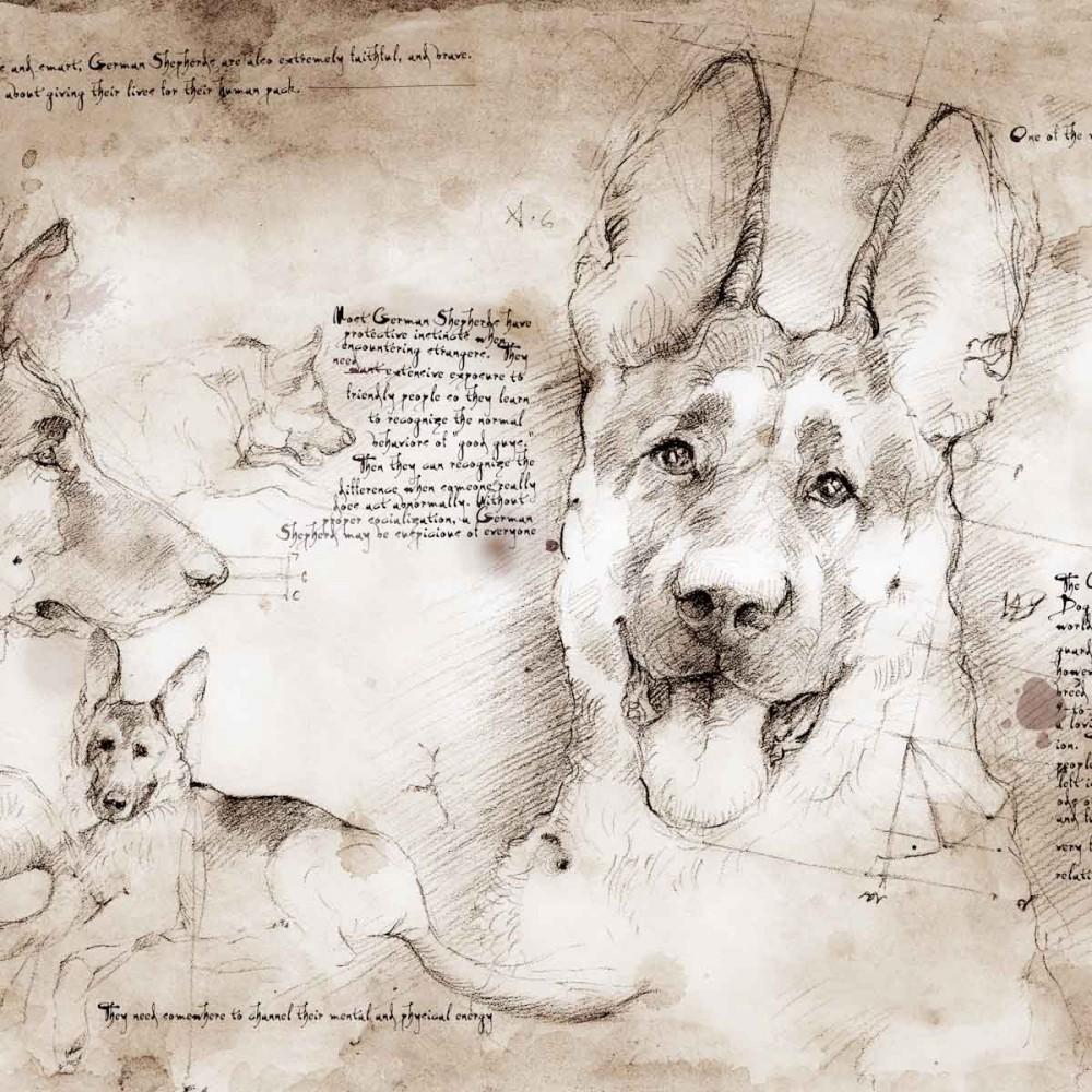 1000x1000 German Shepherd Study A Full Size Da Vinci Style Drawing