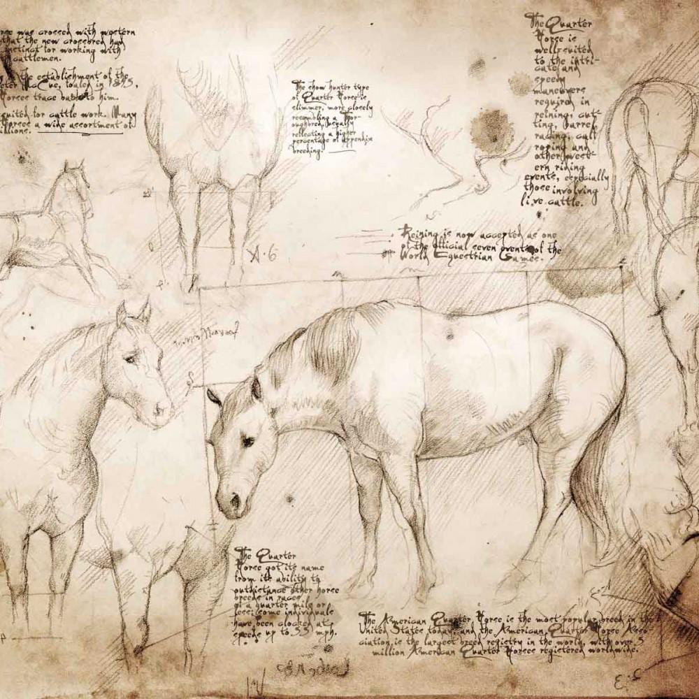 1000x1000 Quarter Horse Study A Full Size Da Vinci Style Drawing