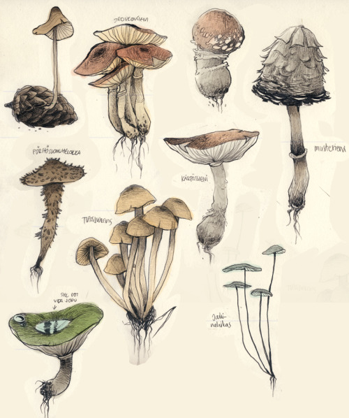 500x598 Drawing Nature Being Biology Mushrooms Fungi The Spiritual Wanderer