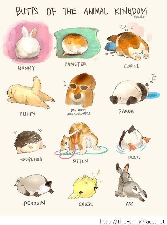540x727 Funny Animal Drawings Thefunnyplace