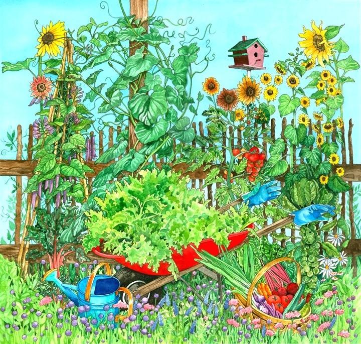 720x685 Vegetable Garden Drawing Three Sisters Garden Vegetable Garden