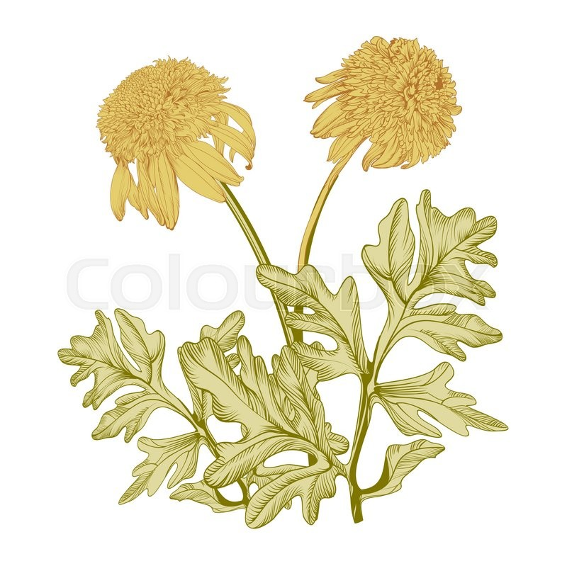 800x799 Hand Drawing Realistic Vintage Garden Flowers On A Yellow