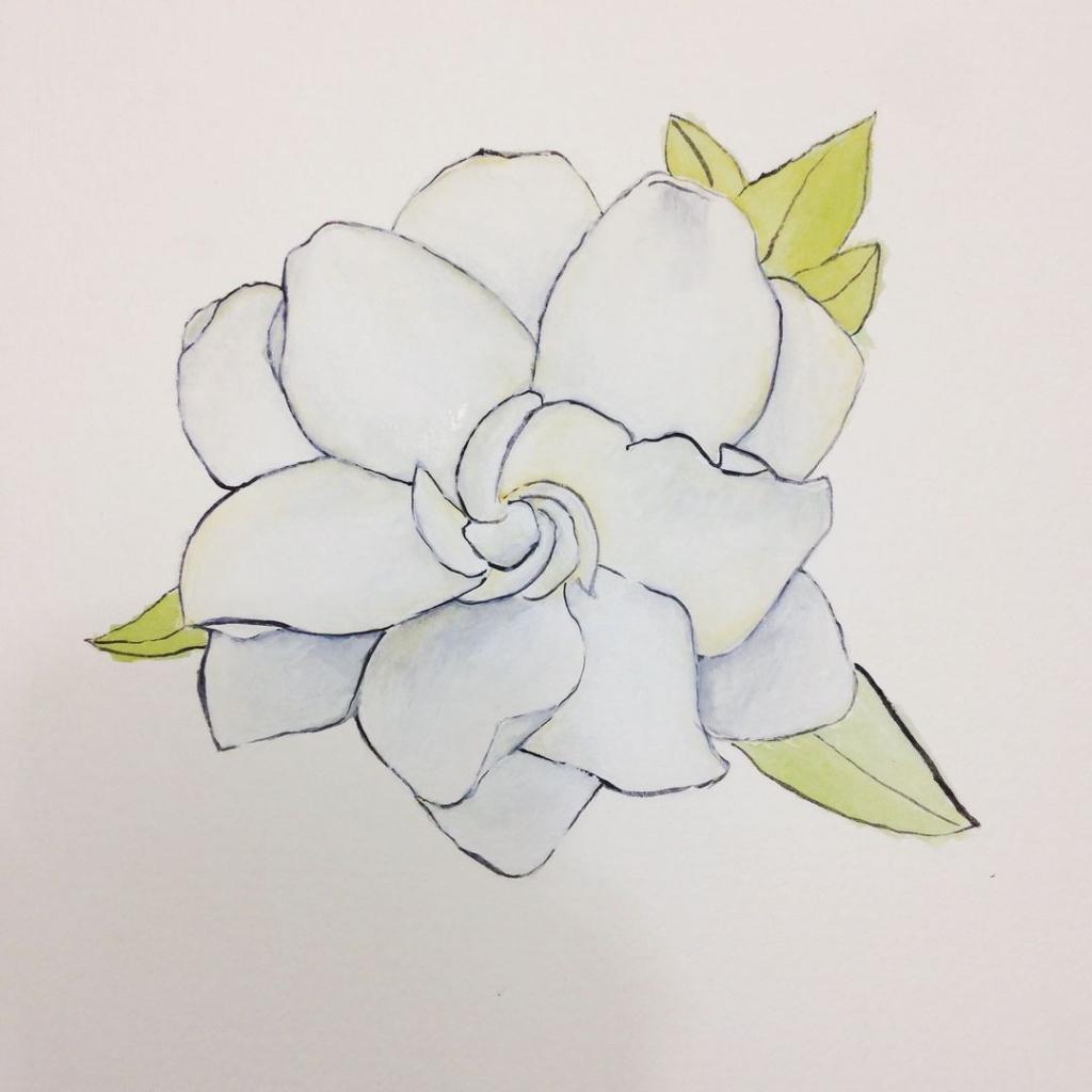 1024x1024 Gardenia Flower Drawing