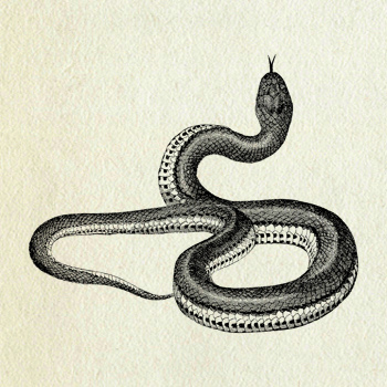 350x350 Vintage Snake Snake Drawing, Snake And Tattoo