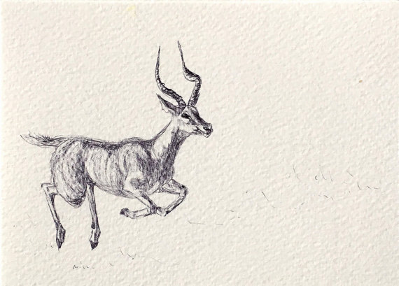 570x409 Gazelle I Original Artwork A6 Size Drawing Ink By A6artworks A6