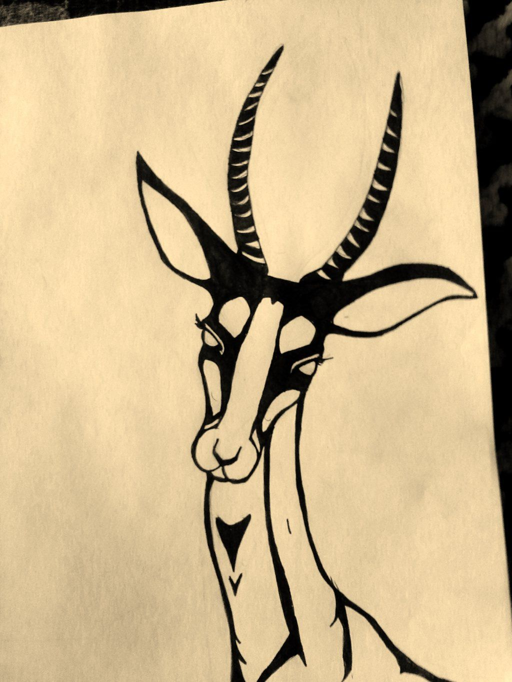 1024x1365 How To Draw A Gazelle