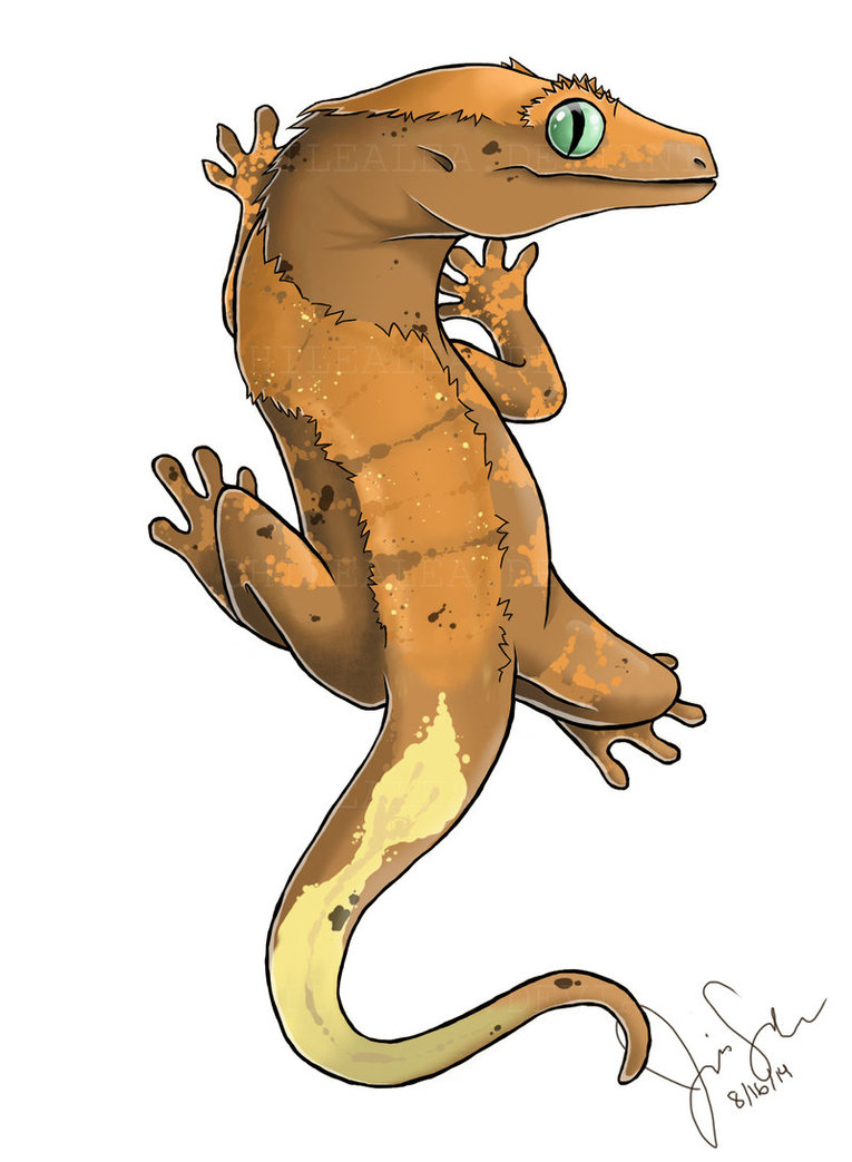 Gecko Drawing at GetDrawings.com | Free for personal use Gecko ...