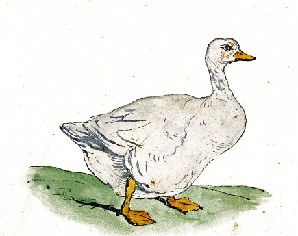 435x345 Filedrawing Of A White Goose.jpg