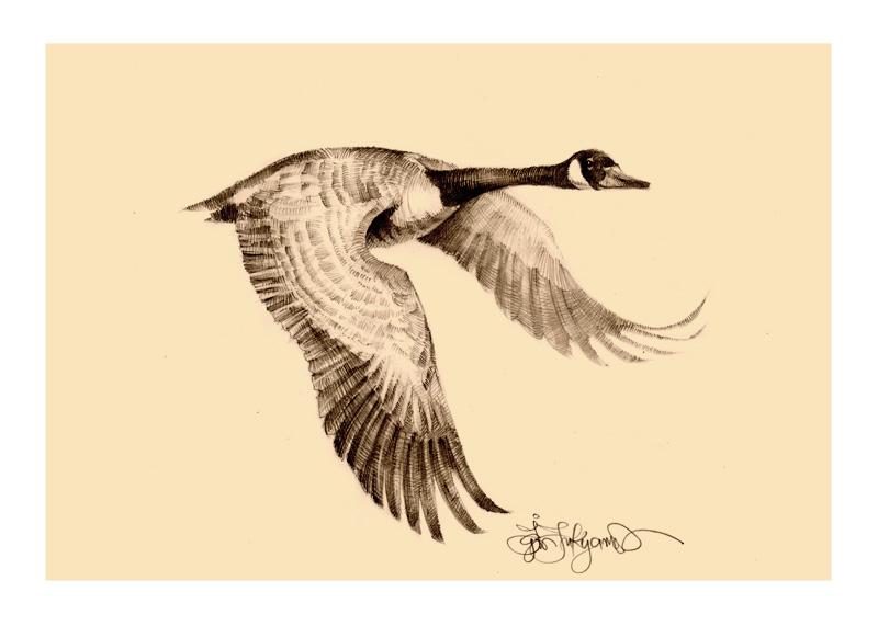 800x571 Goose Drawing