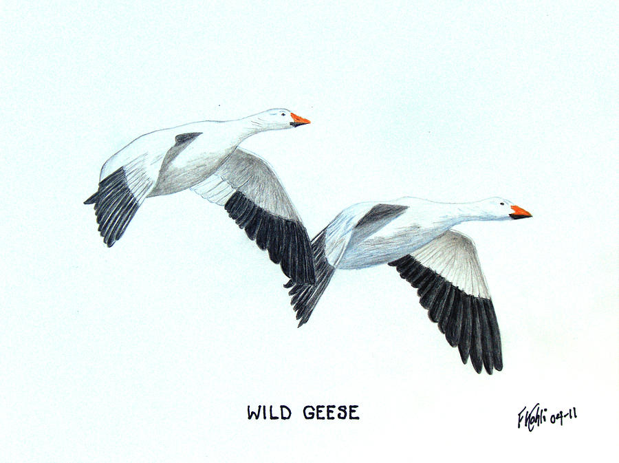 900x673 Wild Geese Drawing By Frederic Kohli