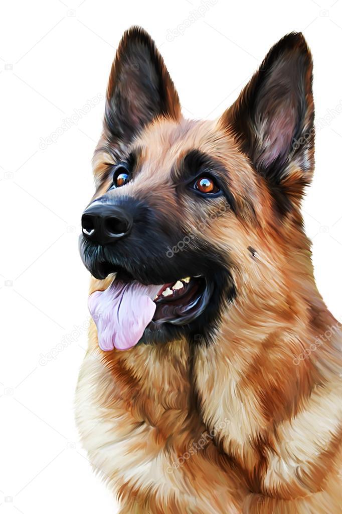 682x1023 Drawing Of The Dog German Shepherd Dog Stock Photo Averyanova