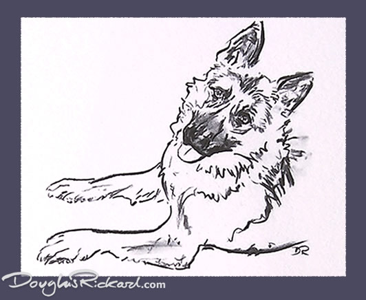 532x436 German Shepherd Drawing