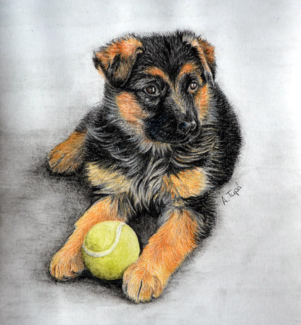602x650 German Shepherd Puppy By Ankaai3