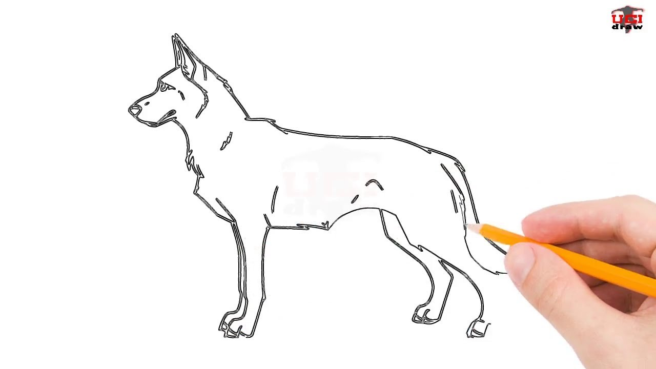 1280x720 How To Draw A German Shepherd Step By Step Easy For Beginners