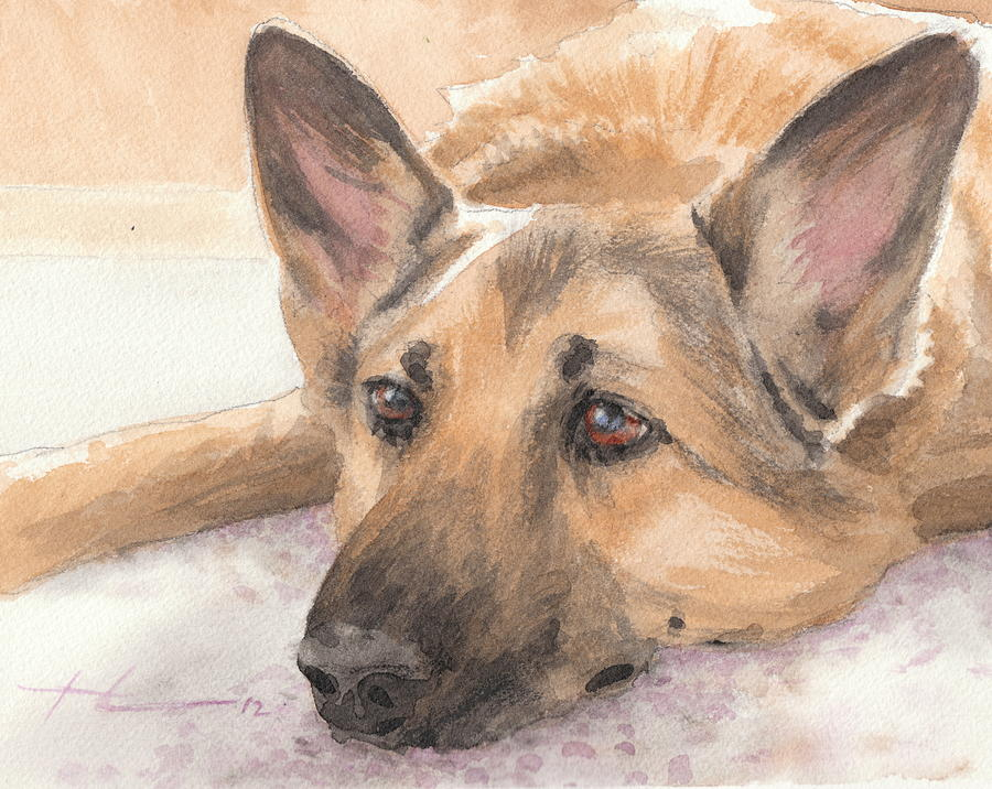 900x716 Shepherd Laying Watercolor Portrait Drawing By Mike Theuer