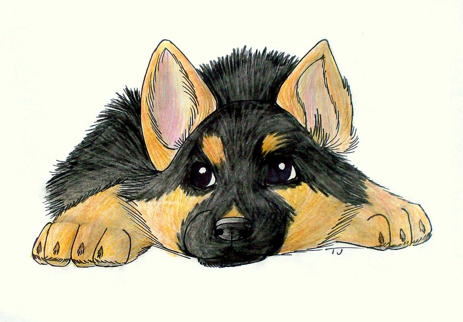 900x626 Anime German Shepherd