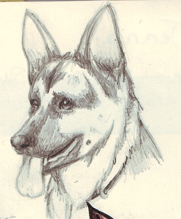 593x715 German Shepherd Head Sketch By Twime777