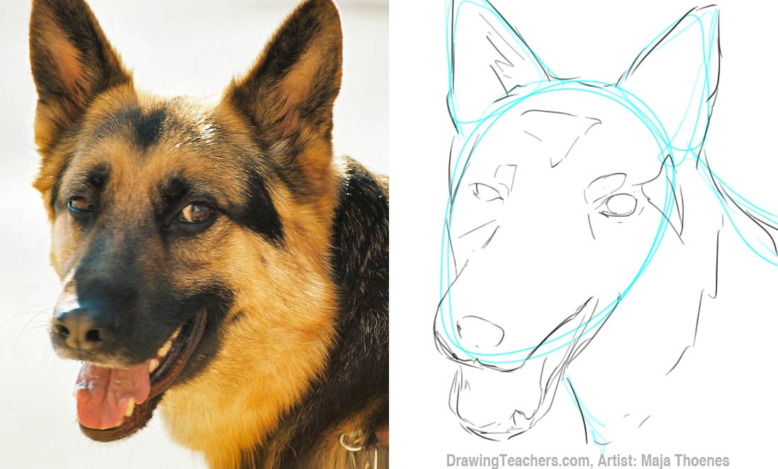 1100x664 How To Draw A German Shepherd Painting Ideas