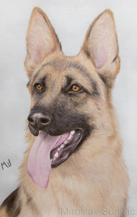 474x752 Colored Pencil Drawing Of A German Shepherd Realistic Drawings
