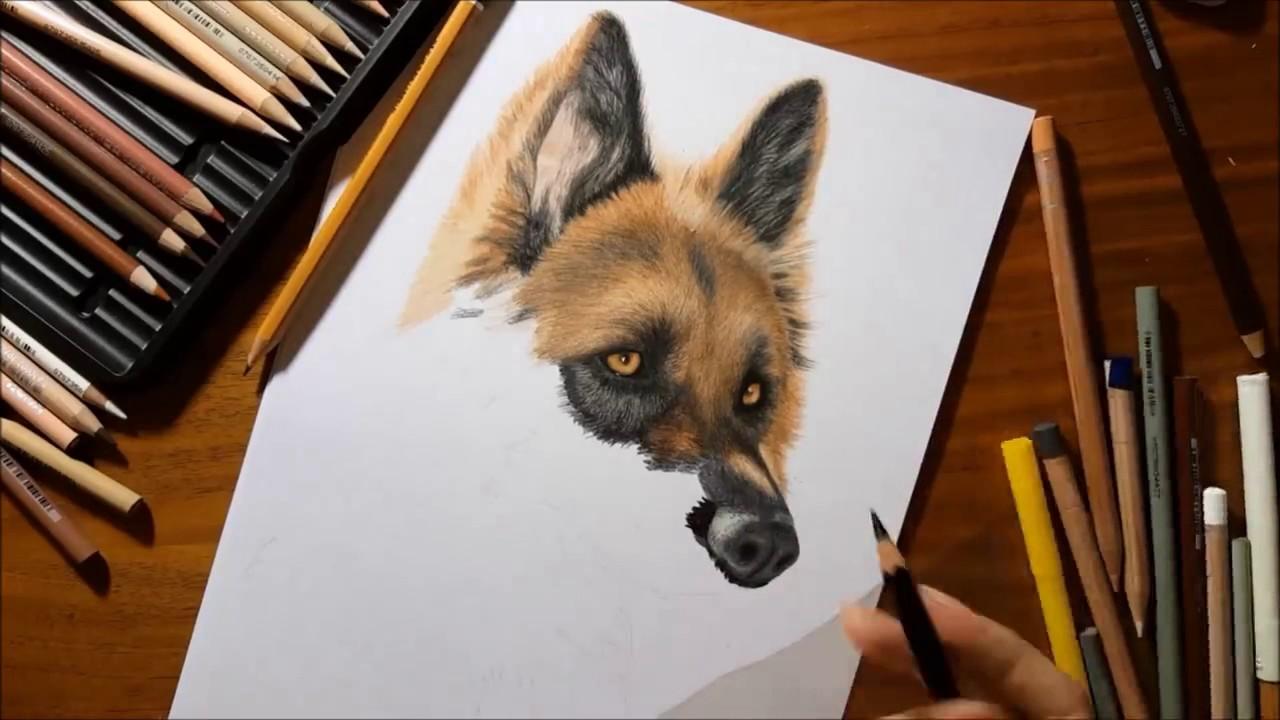 German Shepherd Pencil Drawing At Getdrawings Free For
