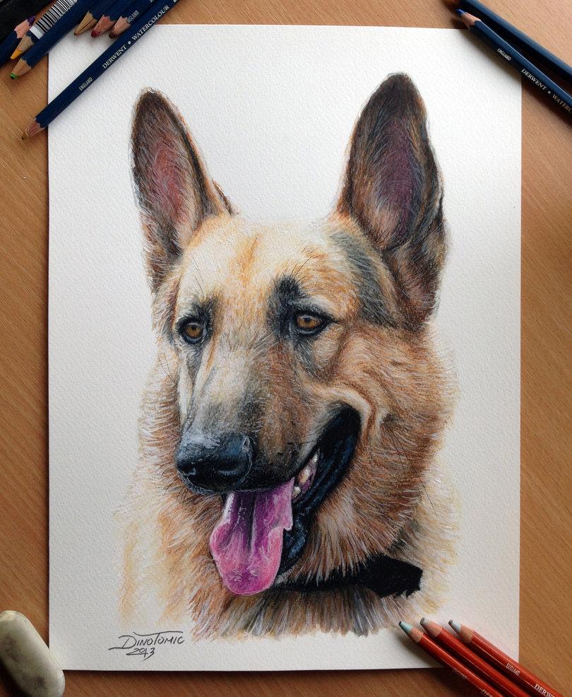810x986 German Shepherd'