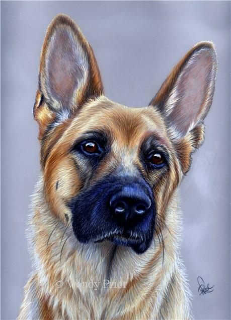 459x635 Myst, German Shepherd Dog