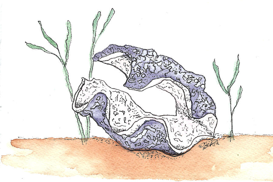 Giant Clam Drawing At Getdrawings Free For Personal Use Giant