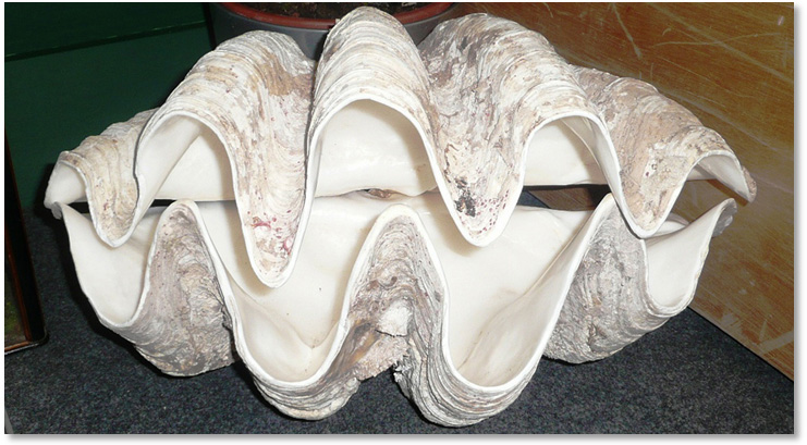 741x409 Hottest Year Ever Giant Clam Reveals Middle Ages Were Warmer Than