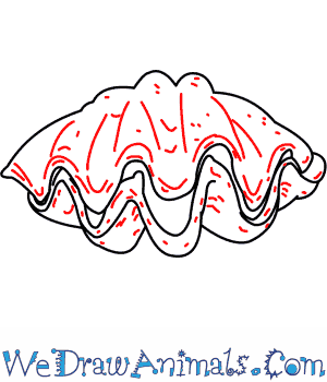 300x350 How To Draw A Giant Clam