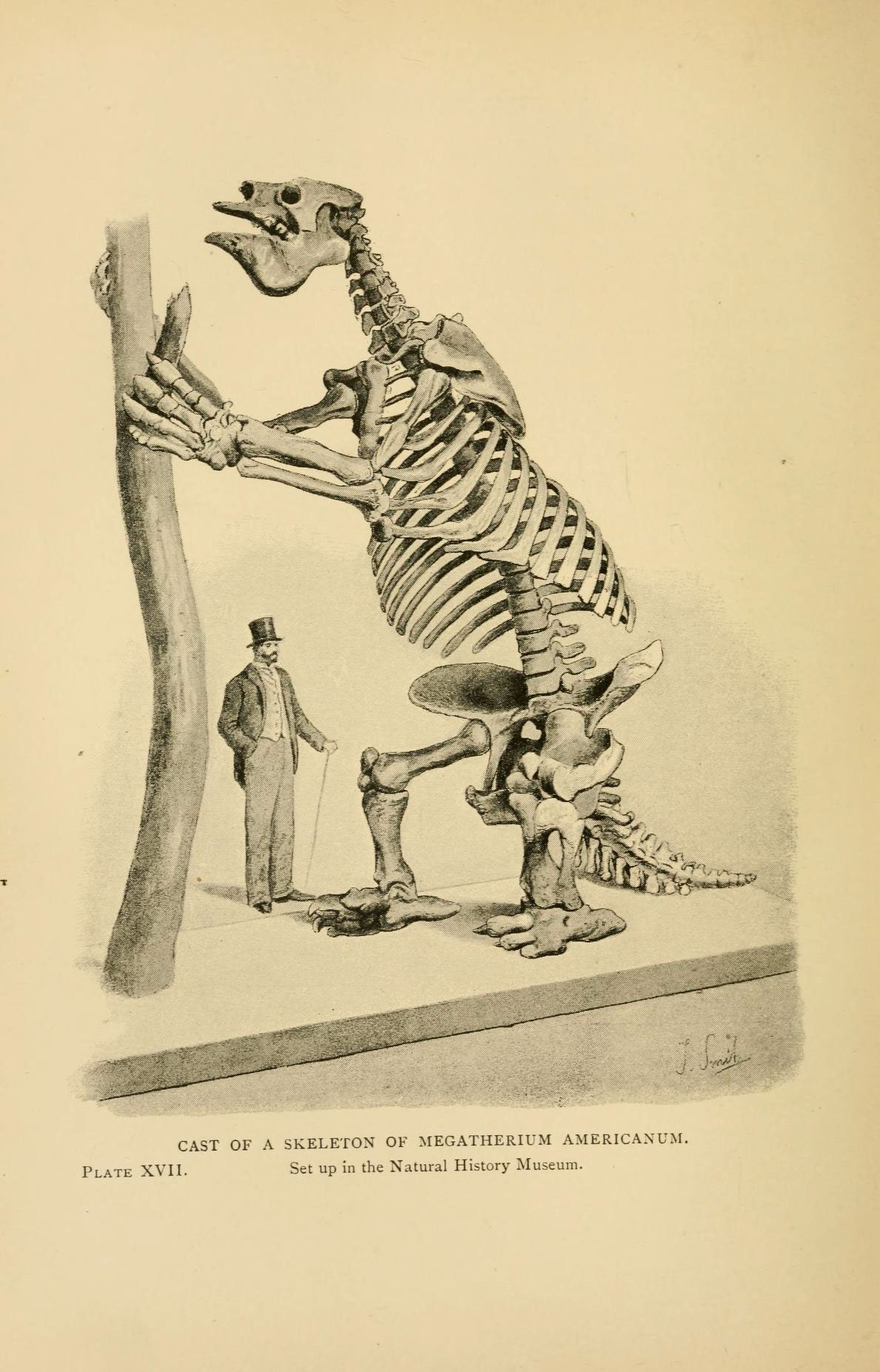 1189x1854 Giant Sloth Megatherium Was A Vegetarian