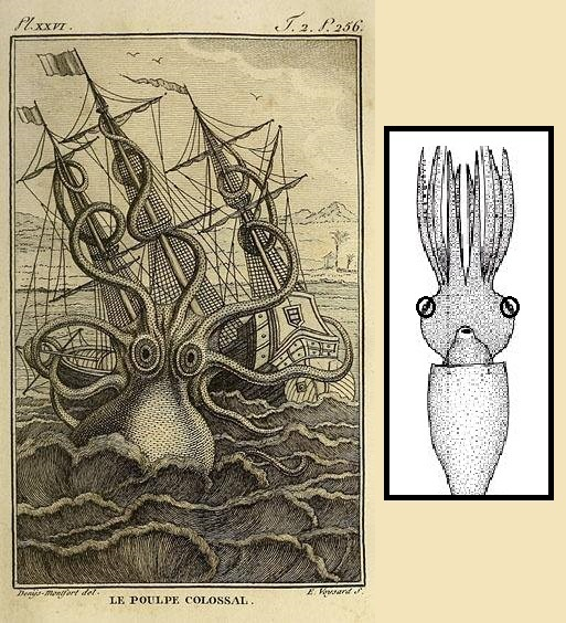 513x564 Frontiers Of Zoology Kraken Or Colossal Octopus=colossal Squid