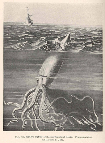 340x462 Giant Squid of the Newfoundland Banks. From a painting by Herbert