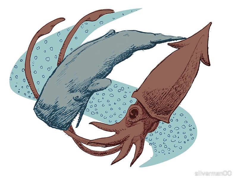 800x616 Sperm Whale vs Giant Squid Art Prints by silverman00 Redbubble