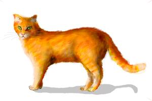 300x200 How To Draw A Ginger Cat
