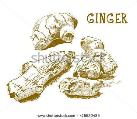 450x392 Vector Engraving Illustration Of Hand Drawn Ginger Root. Vintage