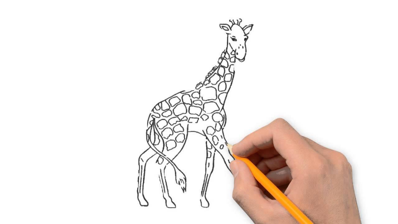 1280x720 Giraffe Animals Pencil To Draw Step By Step