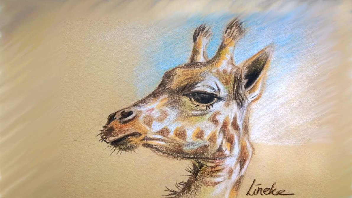 Line Drawing Giraffe : Giraffe head drawing at getdrawings.com free for personal use