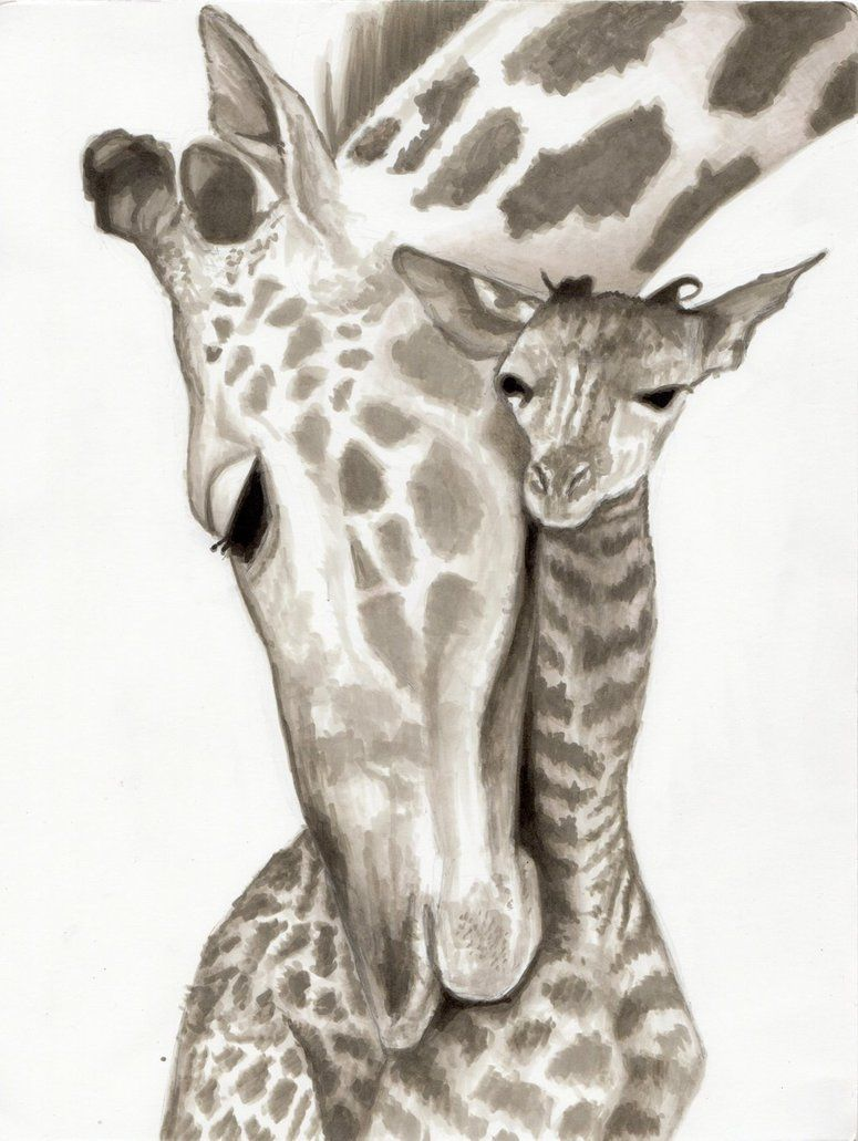775x1031 Baby Giraffe Pencil Drawing Images About Drawing