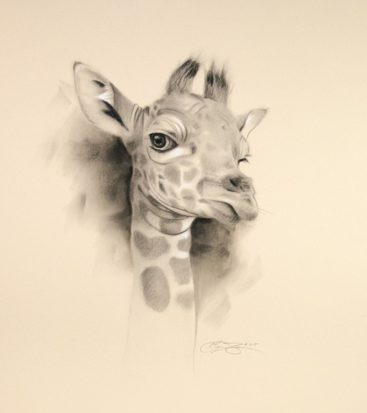 534x600 Charcoal Drawings Toned Drawings