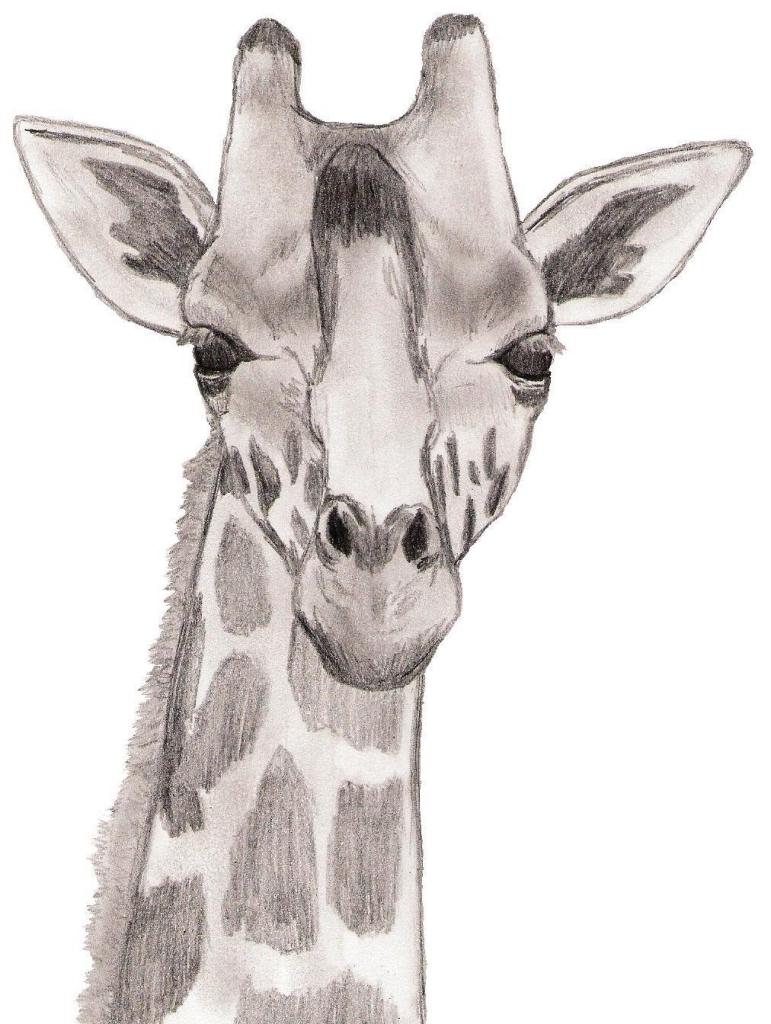 771x1024 Giraffe Pencil Drawings Drawing Face Giraffe Criatividade Desenho