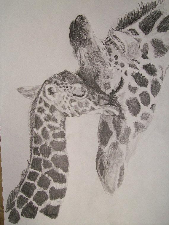 570x760 Giraffe Portrait Pencil Sketch 9 X 12 Inch U Provide Picture