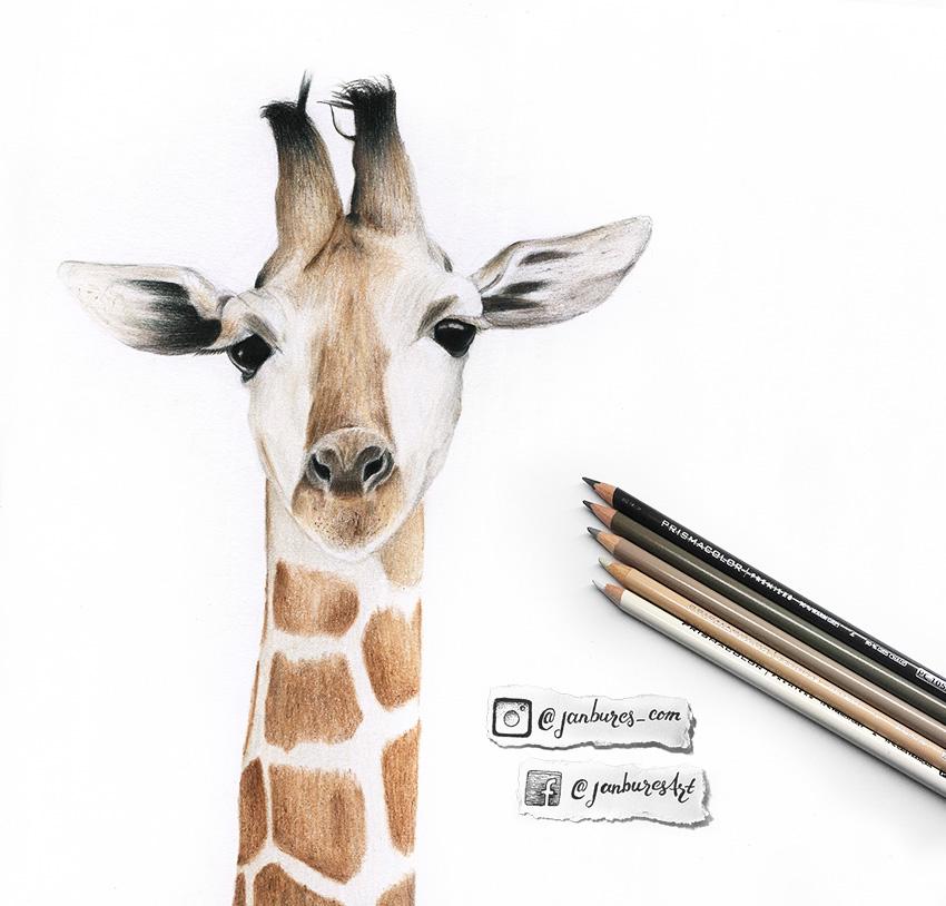 850x814 Jan Bures Photography Graphic Design Giraffe Pencil Drawing