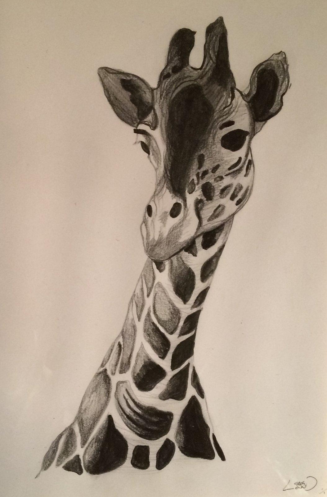 1054x1600 Knock Knock Sketches Giraffe Pencil Sketch