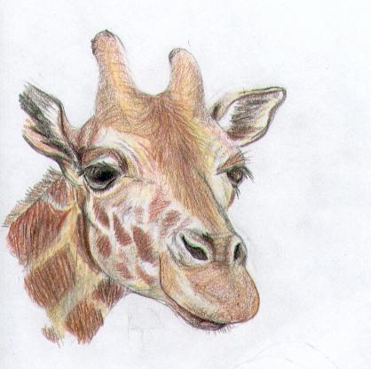 418x415 Pencil Crayon Giraffe By Myrrhiam
