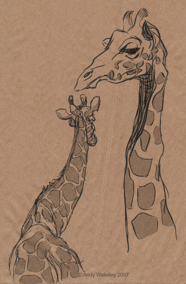 600x914 Giraffe Sketches. By Andy Wakeley. Httpswww